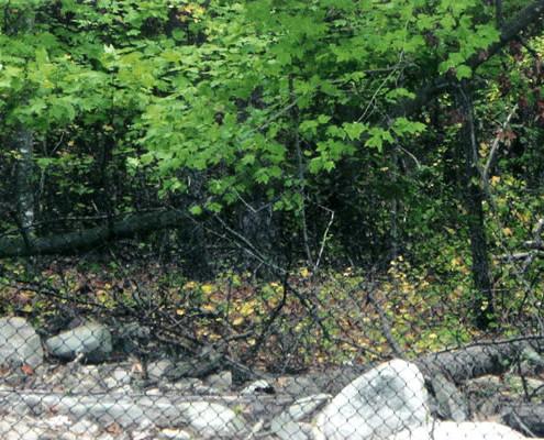 Black Chain Link Deer Fence